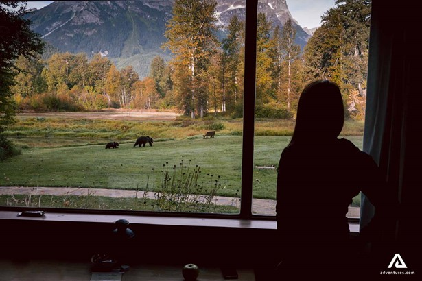 Watching grizzly bear wildlife from the lodge window