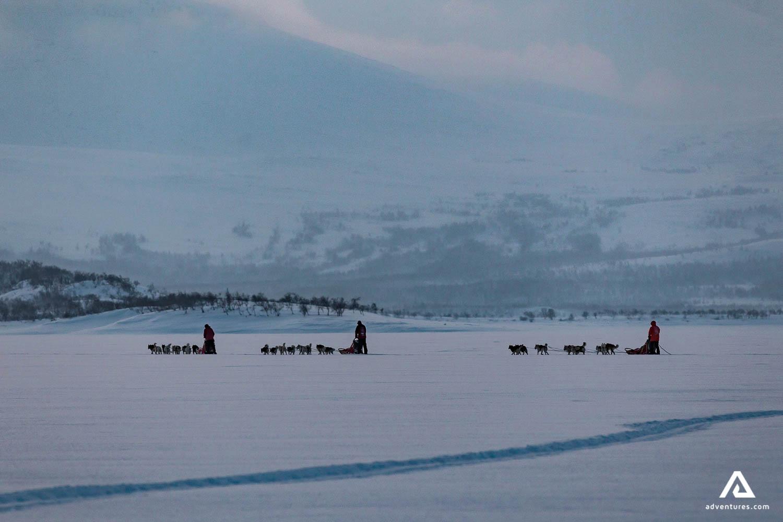 Dog Sledding in the Snowy Landscape