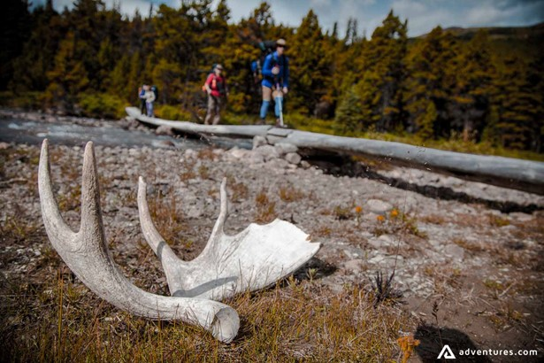 Moose Horn on a hiking trail