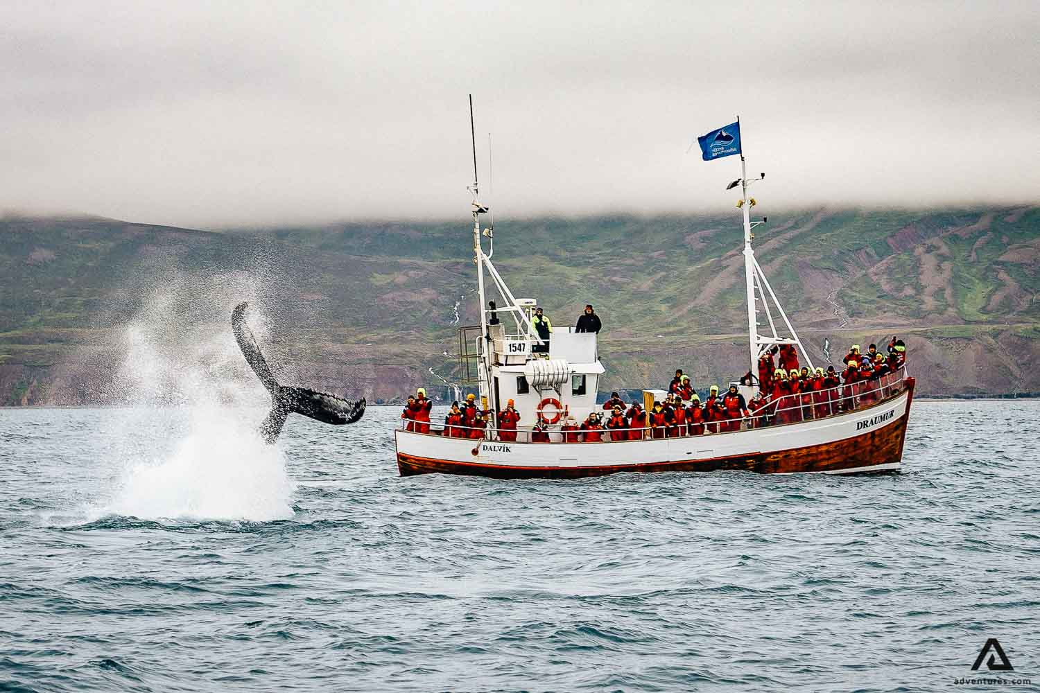 Whale Watching from a boat in Iceland
