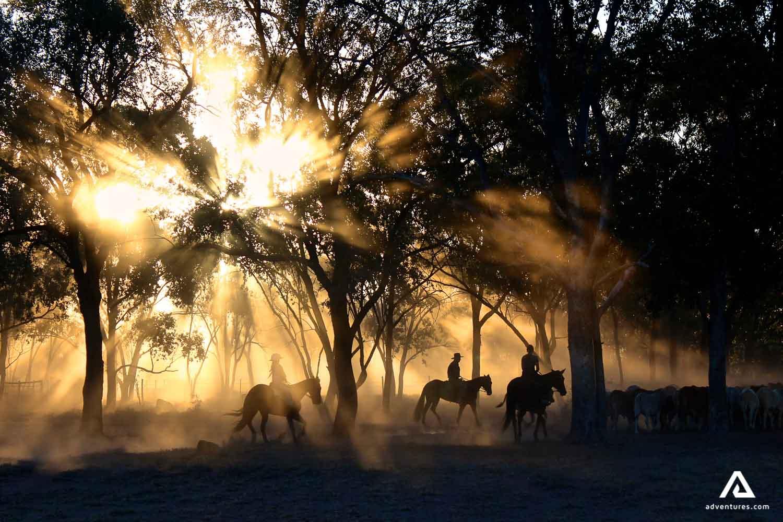 Horseback Riding Scenery at Night