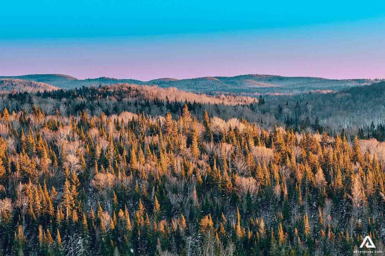 Forest in Quebec