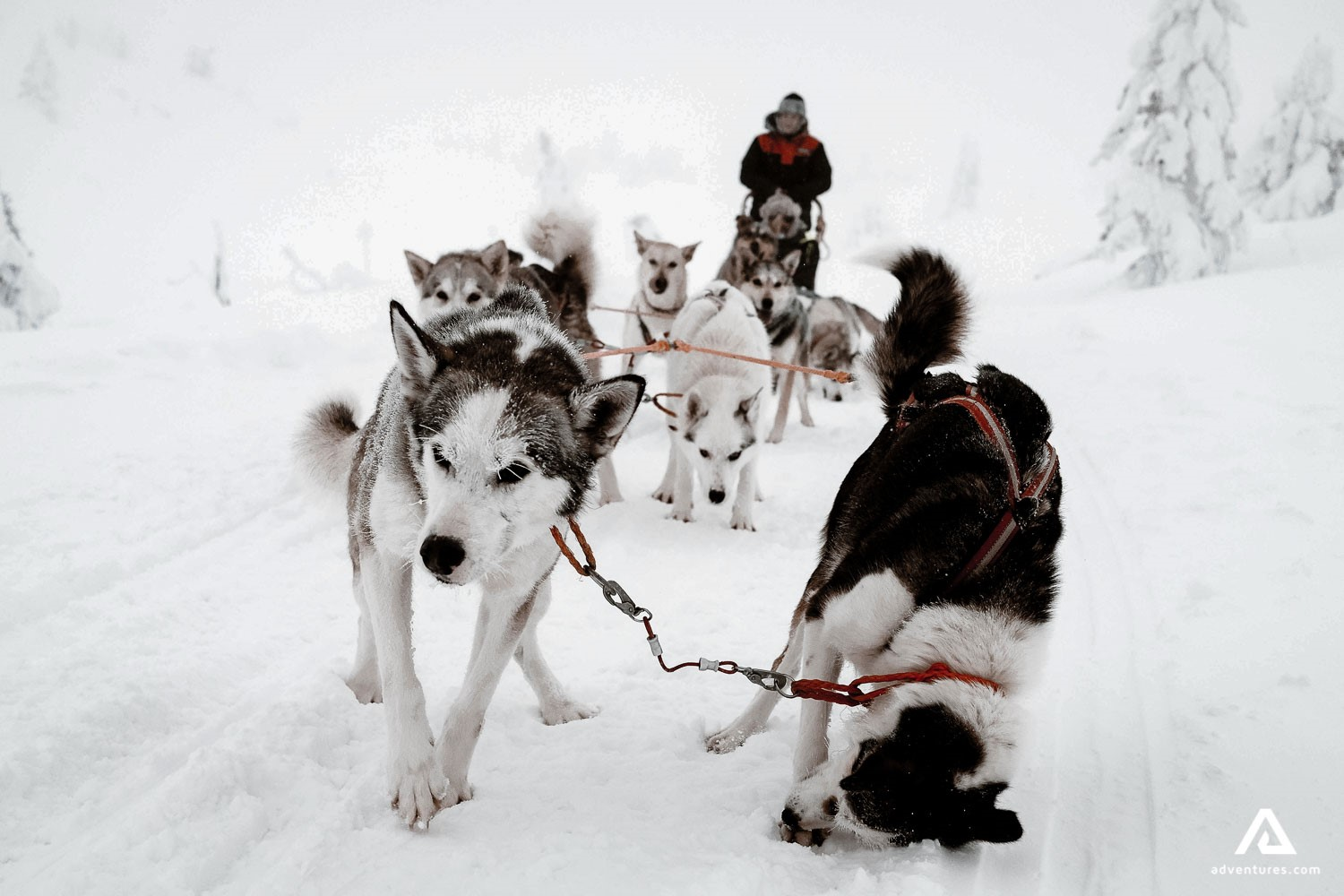 Dog Sledding Tours In Canada | Adventures com