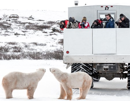 6-Day Polar Bear Quest from Churchill, Manitoba