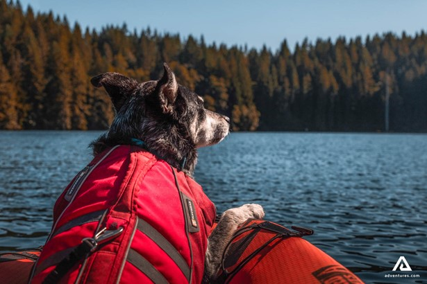 Canoeing with the dog in Canada