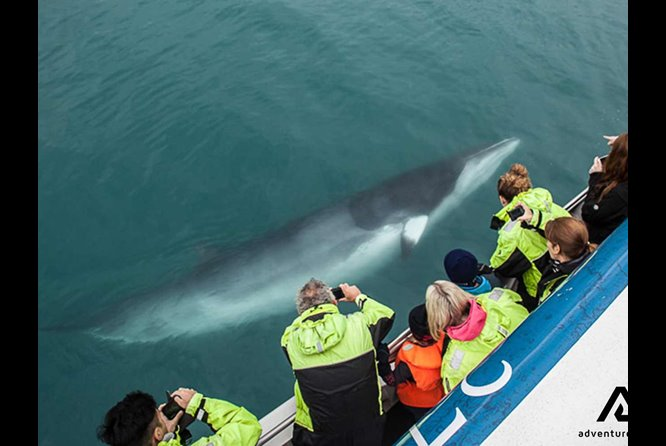 whale encounter iceland