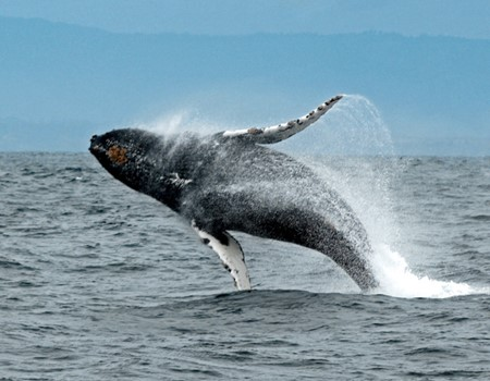 Whale watching and sightseeing tour