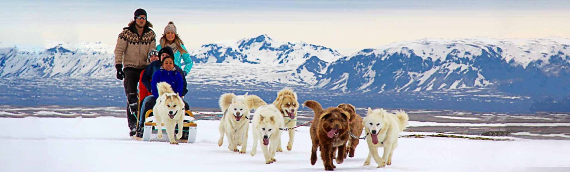 dog sledding tour iceland