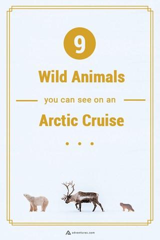 Wild Animals In The Arctic