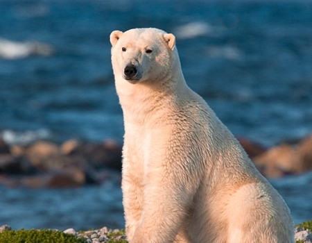 Polar bear viewing tour - Along the Hudson Bay