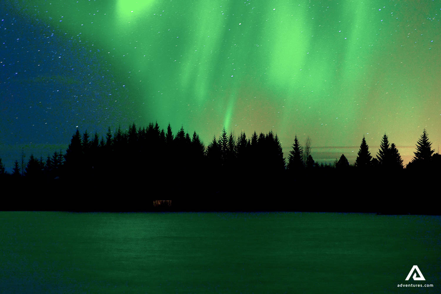 Northern Lights over the Forest