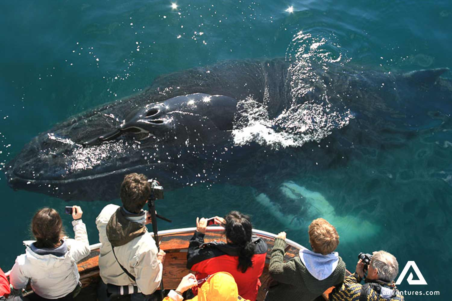 Encounter with a whale on a whale watching tour
