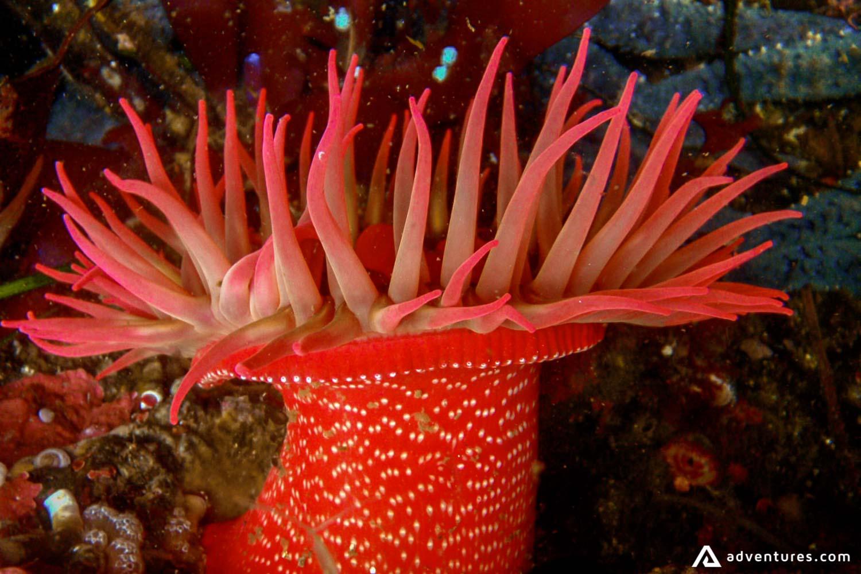 Underwater Sea Flora