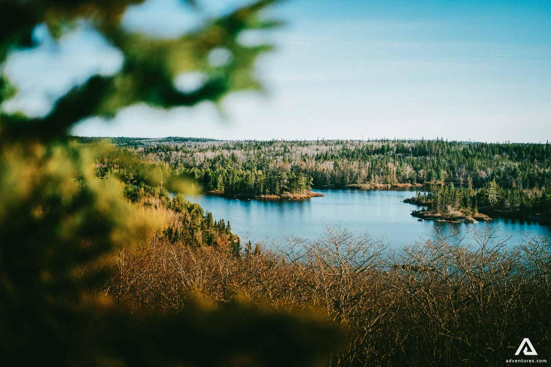 Nova Scotia Forest