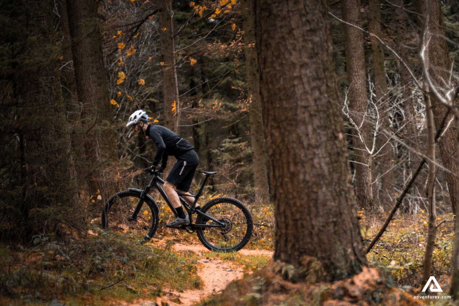 Man cycling in the the forest