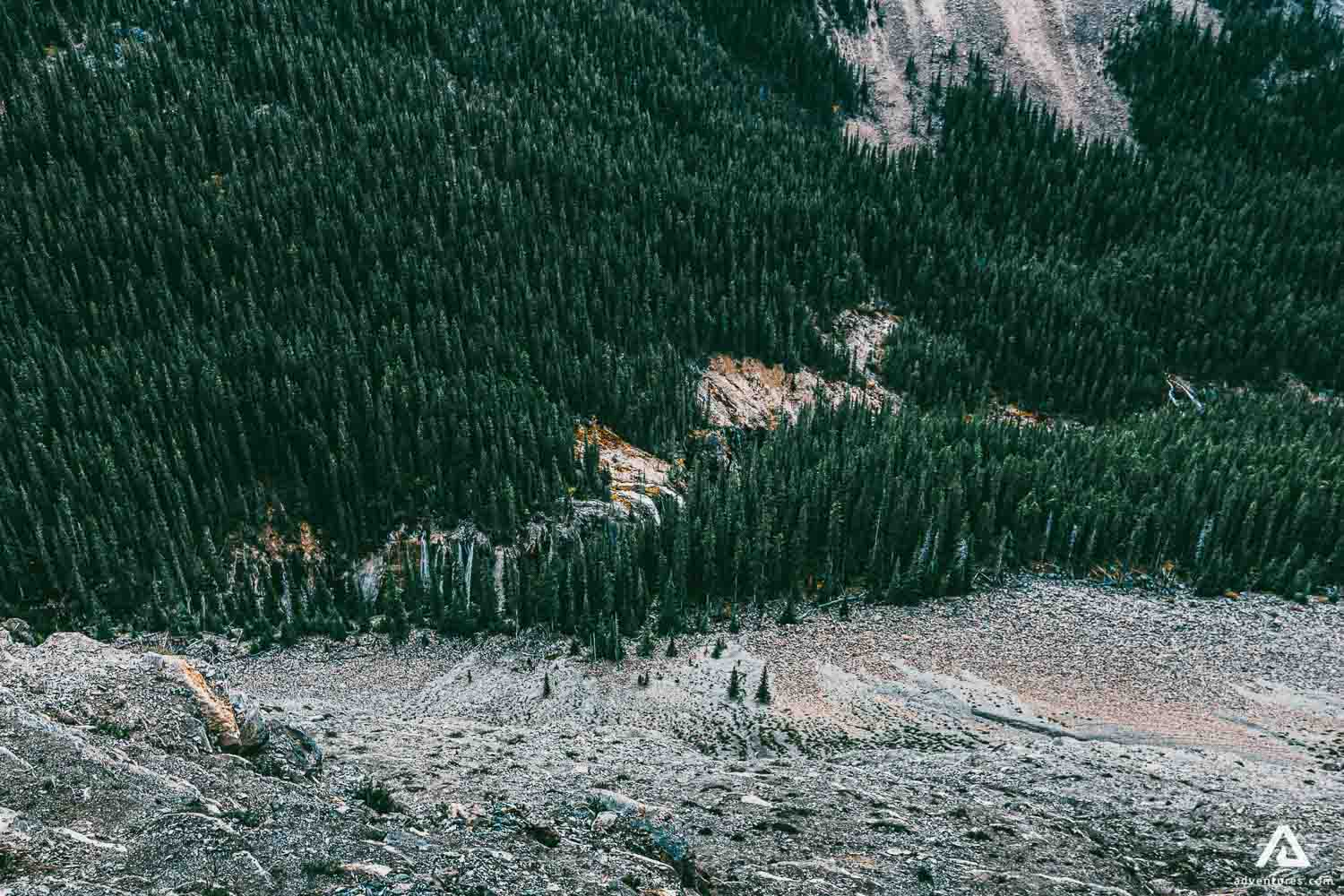 Forests in Alberta