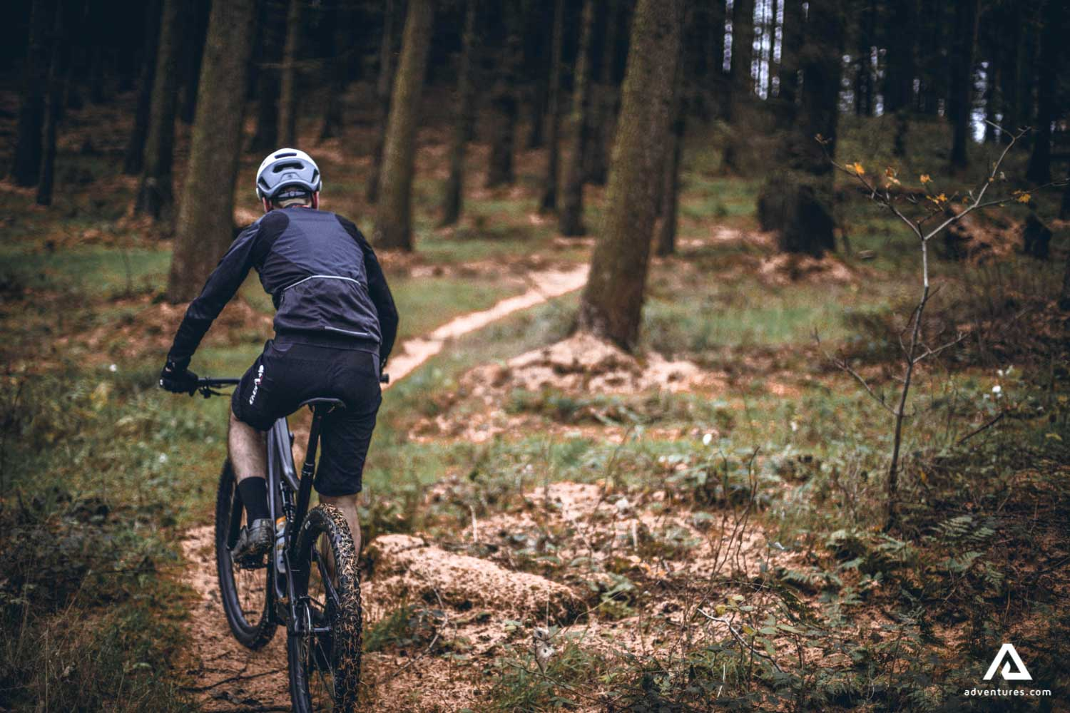 Mountain Cycling in the forest