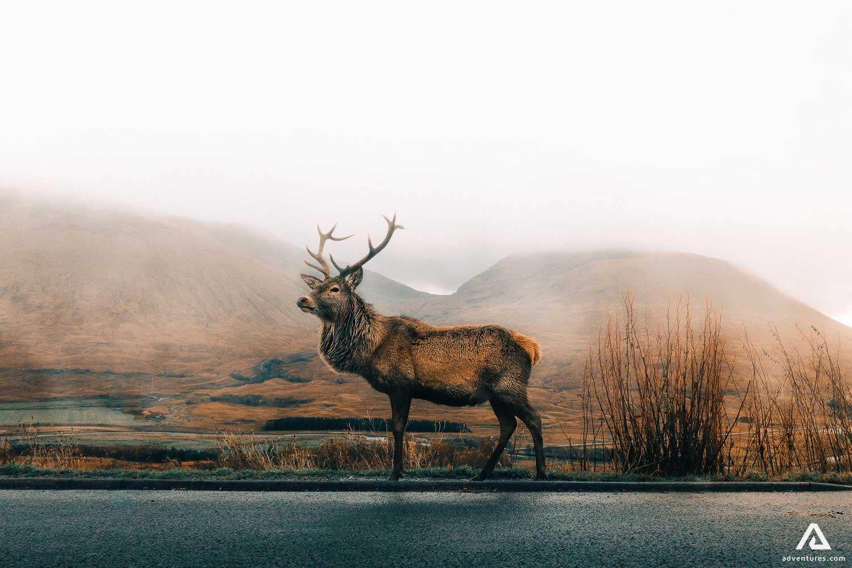 Deer landscape