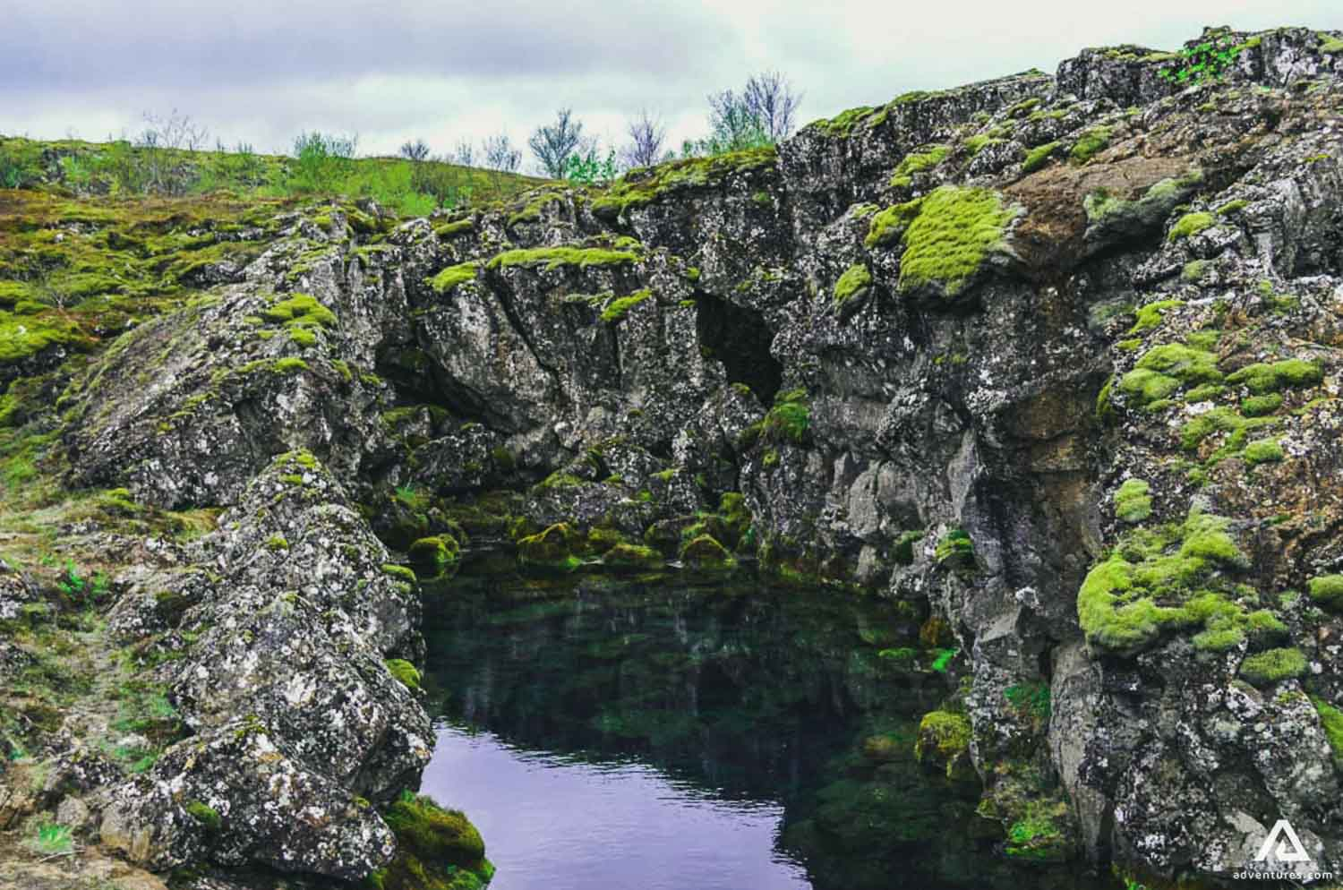 Tingvellir National Park autumn flora and moss covered