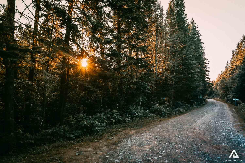 New Brunswick Forest